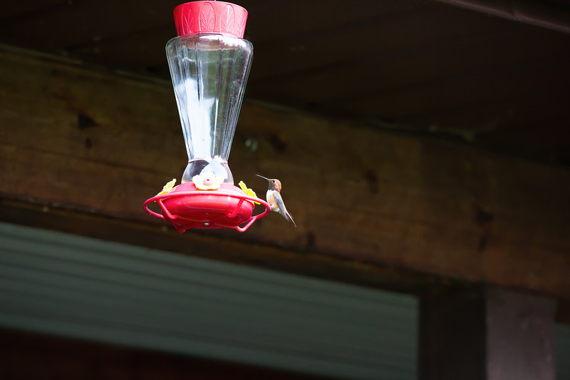 humming bird (54 of 55).jpg