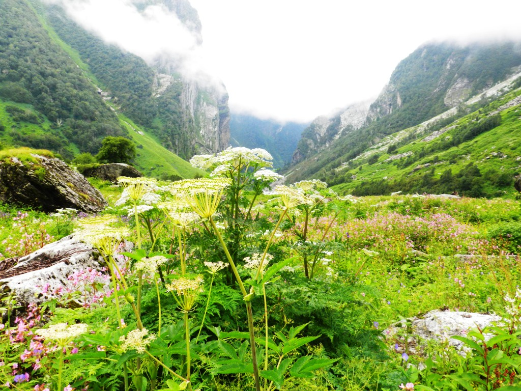 UNESCO World Heritage Sites in India: Valley of Flowers