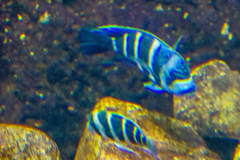 GA Aquarium with Linc, Ali & Abe-125.jpg