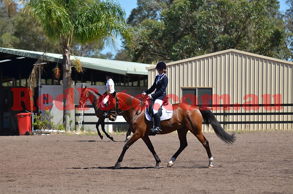 PDC-Young-Horse-Qualifier