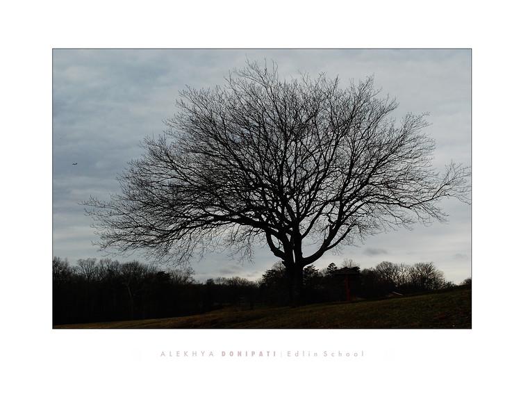 Donipati 2 - Tree Silouette.jpg