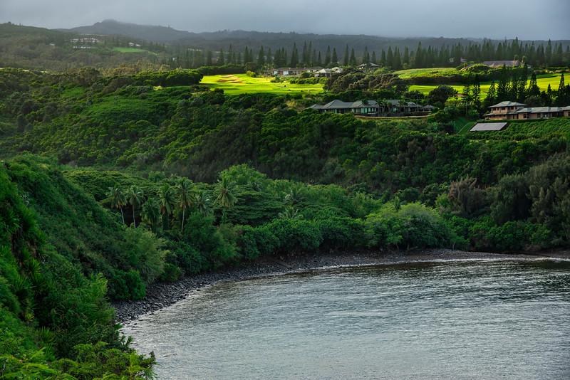 Lush Foliage of Maui, Hawaii