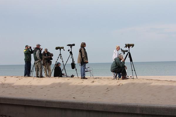Lakefront Birding