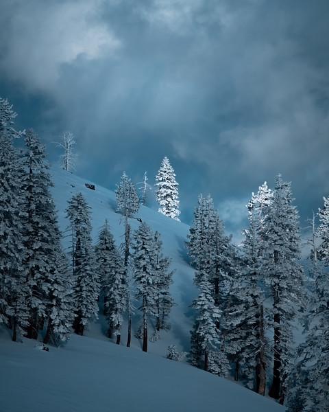 judah_tree light.jpg