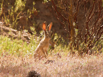 Rabbits_&_Hares