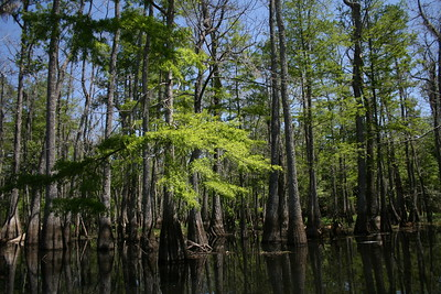 Honey Island Swamp, 28 April 2010