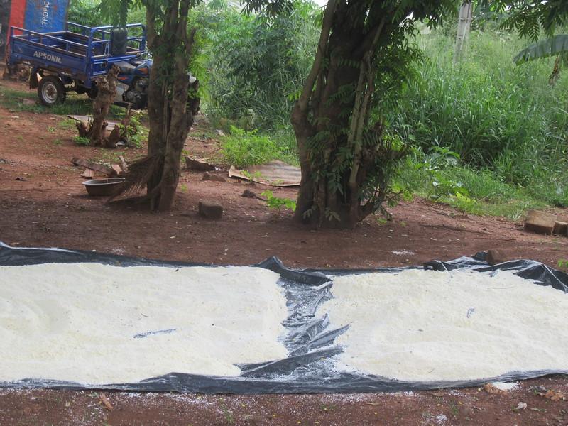 045_Aniassué. Semoule de manioc (Attieké). 5 de 7. Séchage au soleil.JPG