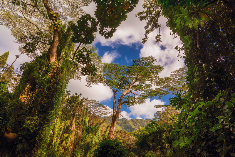 Oahu Forest3.jpg