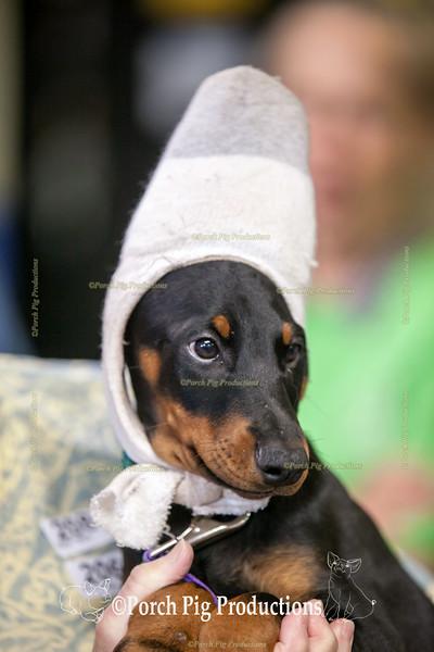 Dog Agility Snapshots