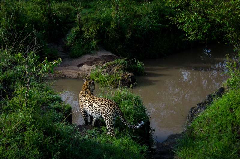 Kenya-0245.jpg