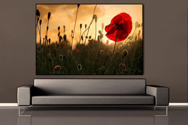 sofa-brown-silver-poppy-red.jpg