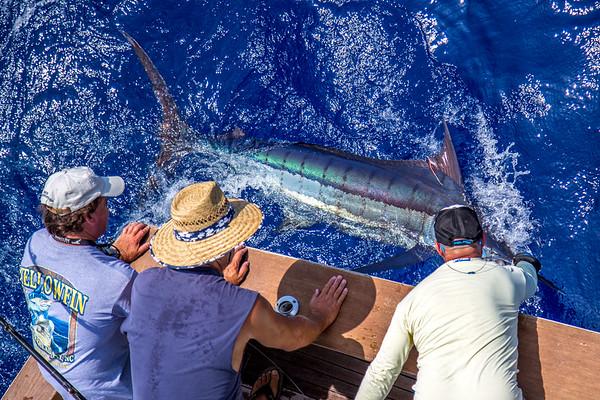 Dad and Dick Grubar with Grander Marlin Sportfishing