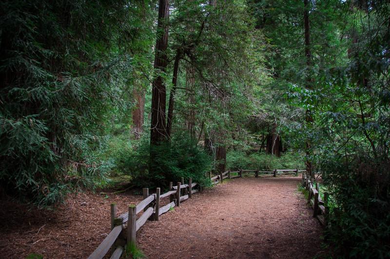 Redwood-38.jpg