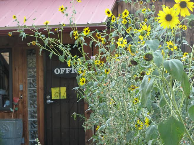 Sunflowers in front of Silver Adobe River Inn