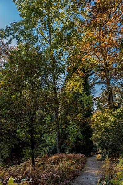 Wakehurst_Autumn-6095.jpg
