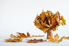 Bouquet  of dried yellow maple leaves in a hand-made ceramic cup isolated on a white background