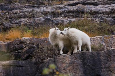 2009 Banff & Jasper (fall)