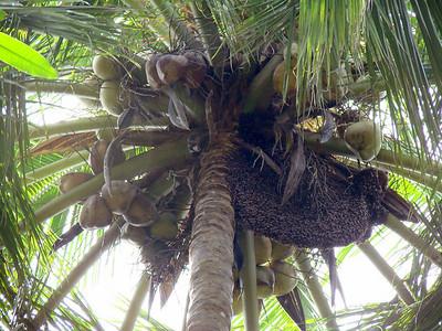 Honey Bees Nests