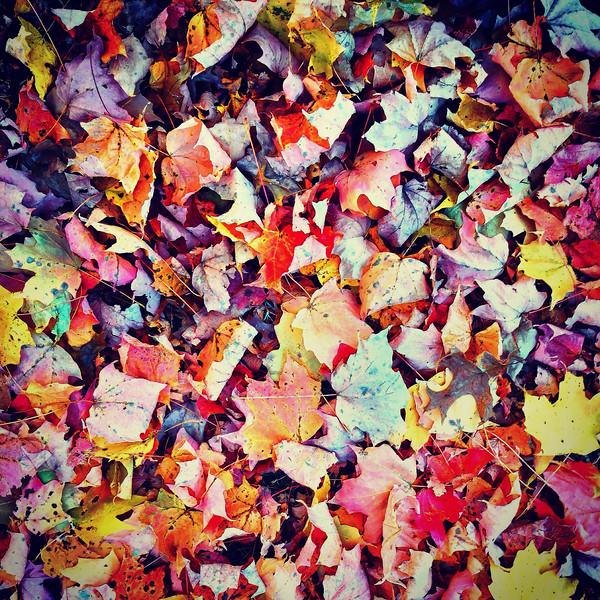 The kaleidescope of fall.jpg