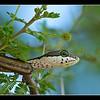 Snake, Deception Valley Lodge, Botswana, 2010