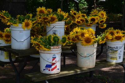 Sunflowers Farm Equipment