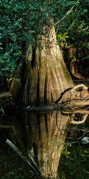 Florida Everglades May 22-24, 2009