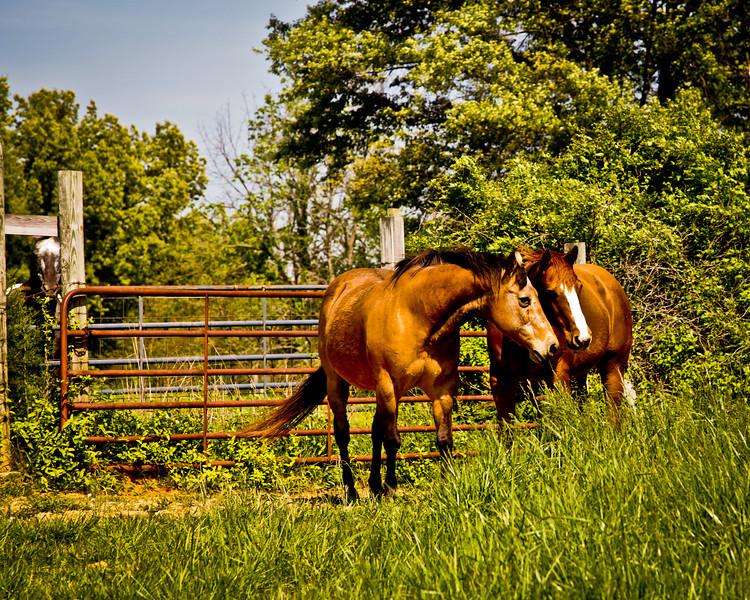 Horses-1710.jpg