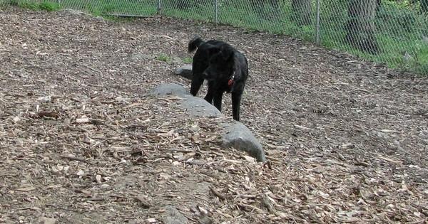 PICS JUNE 12::STAR (new pup)