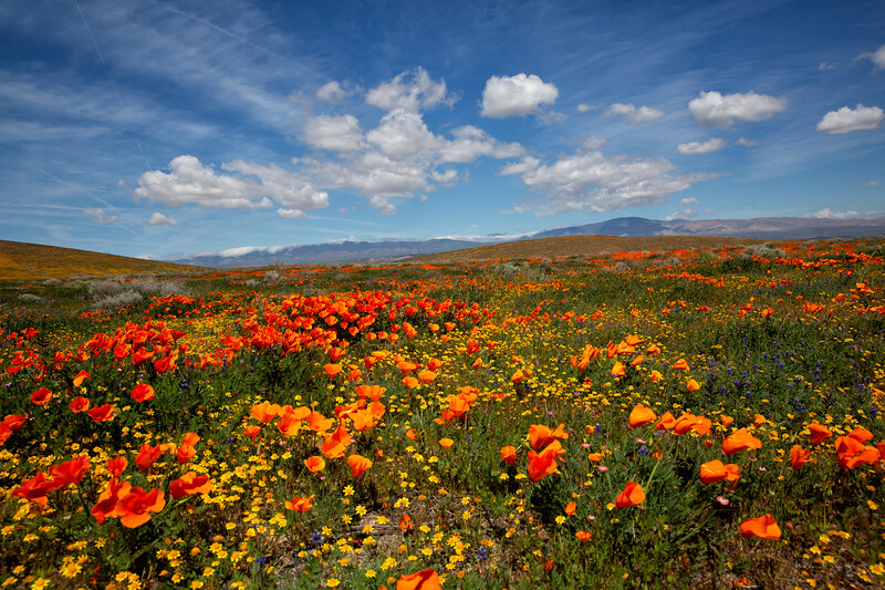Antelope Valley Poppy Reserve and Lancaster Area