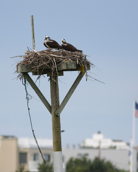 2012 - The Osprey Nest