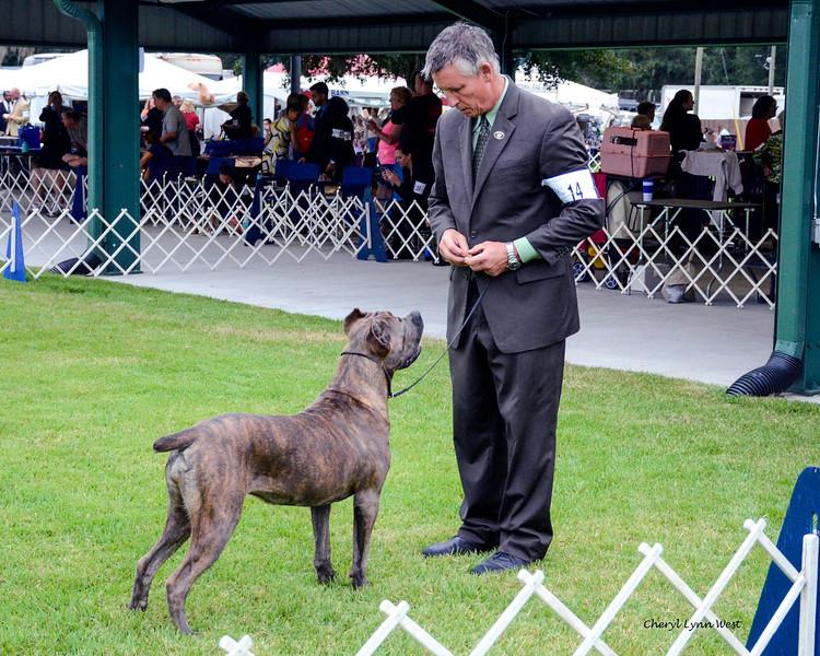 Gator Country Tululah Of Boca Grande, Owner j- Lynn Edmonds (Randy McAteer, Agent)