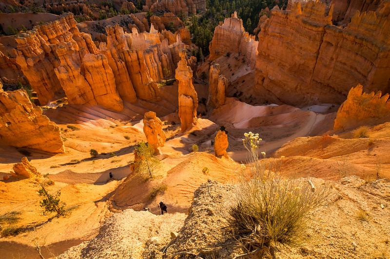 WVWS_Bryce Canyon-5956.jpg