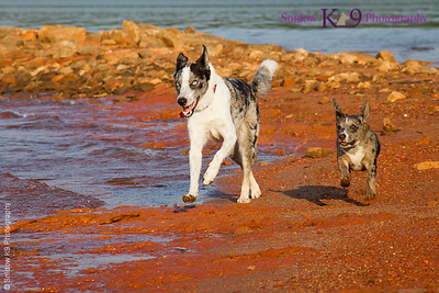 Dogs, Kats, Agility and Dock Diving