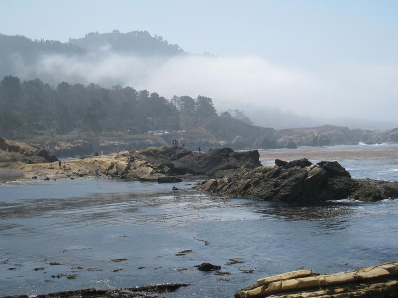 Point Lobos 8:2009 22.jpg