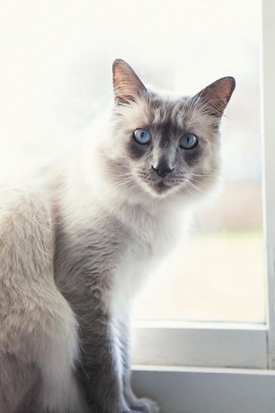 cat onwindow sill