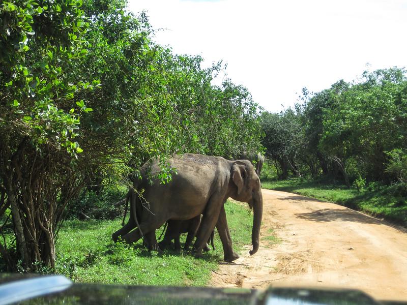 Sri_Lanka17-9837.jpg