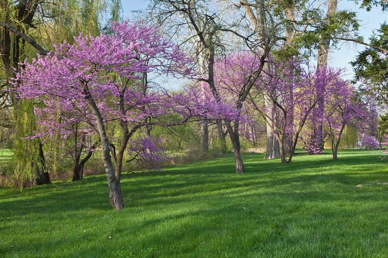 Spring12-1239.jpg