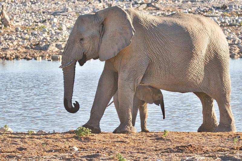 ELEPHANTS of ETOSHA