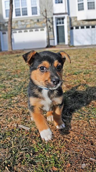 puppy 2.jpg