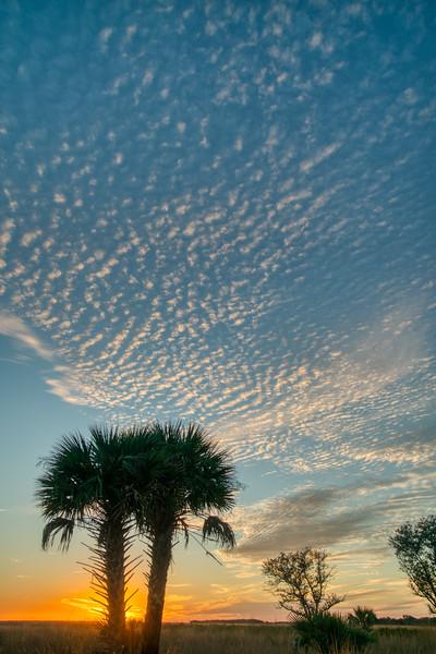 Florida Prairie 2020-2.jpg