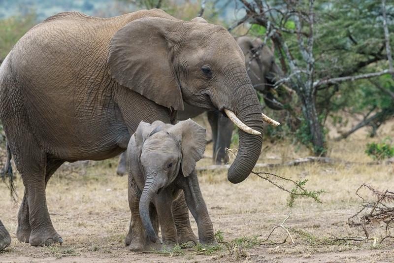 Kenya 2015-09145.jpg