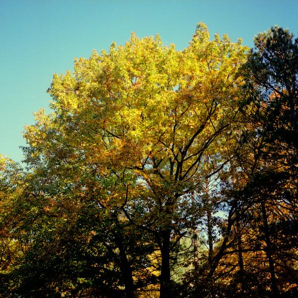 Autumn Hike 120 Film-00015.jpg