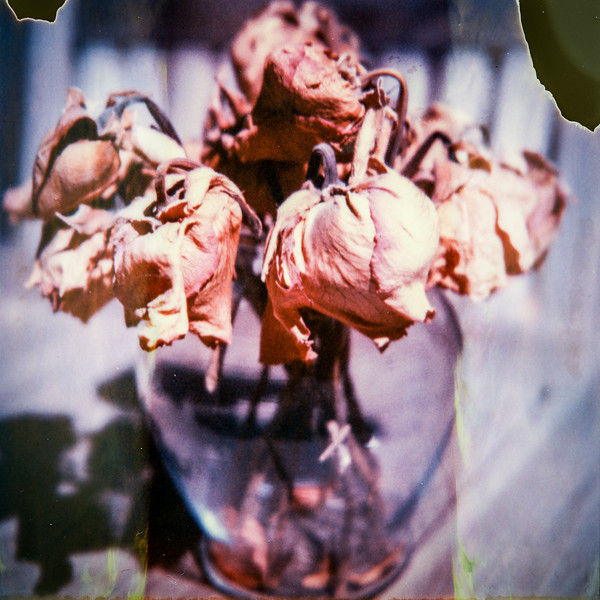 polaroid-glass-flowers019.jpg