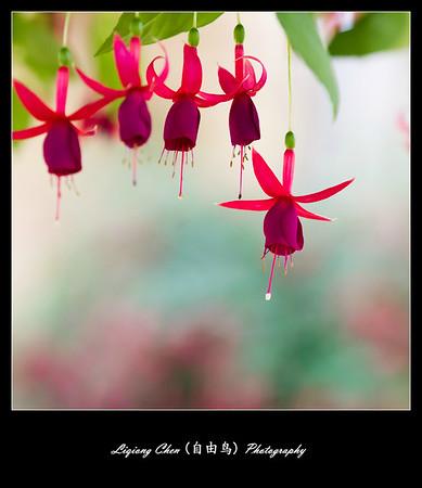 Unknown-flower 33