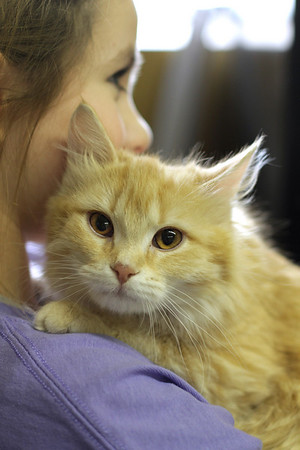 Adoption & Pet Events
