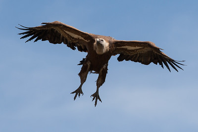 Fugle i Extremadura