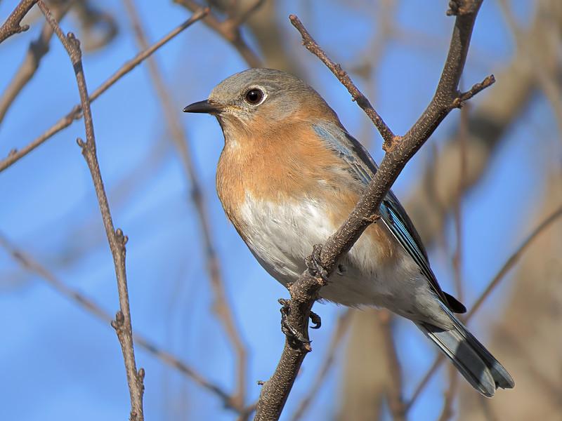 sx50_bluebird_faith_bit_cr2_dpp_014.jpg