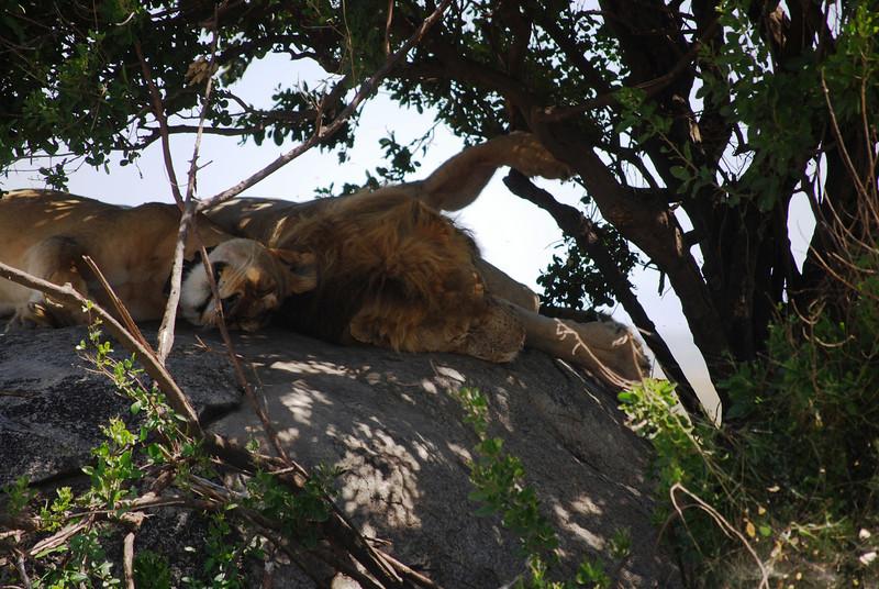 Serengeti (188).JPG