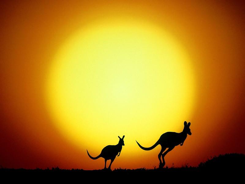 The Kangaroo Hop, Australia.jpg