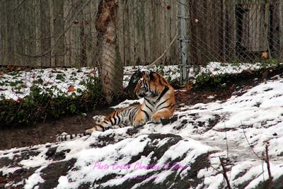 Pittsburgh Zoo & PPG Aquarium- Pittsburgh, PA